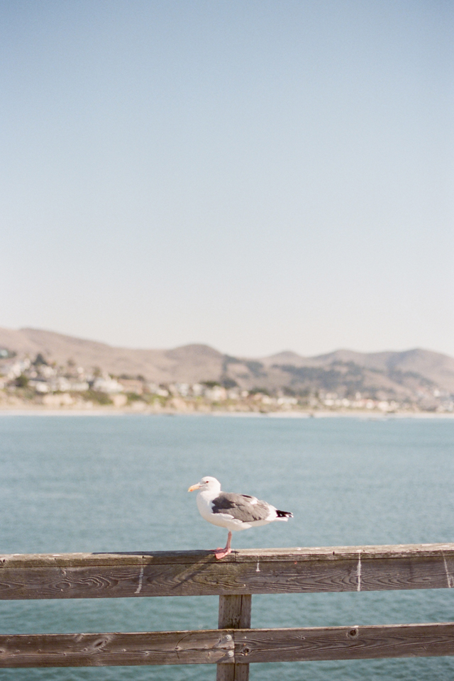 seagull in cayucos