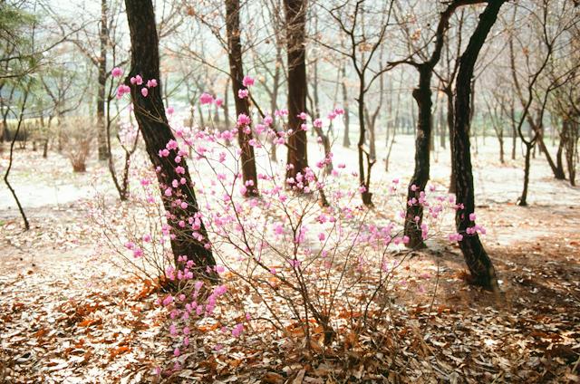 seoul traditional village engagement shoot by douglas despres-39