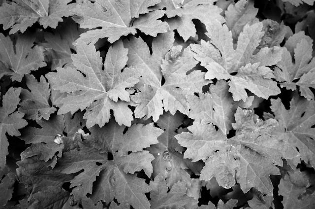 wedding-mcway-falls-glen-oaks-big-sur-by-helios-images-127