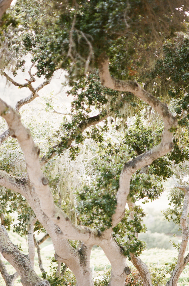 carmel-valley-ranch-wedding-by-helios-images-10