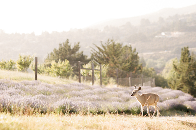 carmel-valley-ranch-wedding-by-helios-images-11
