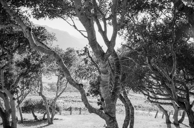 carmel-valley-ranch-wedding-by-helios-images-111